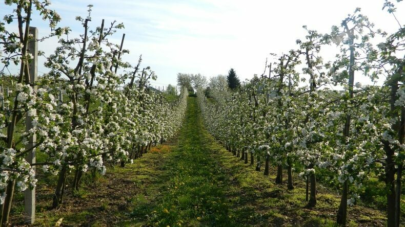 XII International Symposium on Integrating Canopy, Rootstock and Environmental Physiology in Orchard Systems 2020