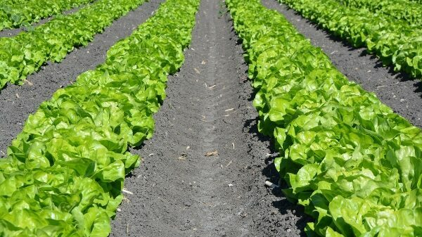 Advancements in Biopesticides for Profitable Vegetable Production
