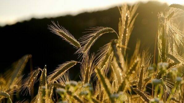Dando forma al futuro de la agricultura