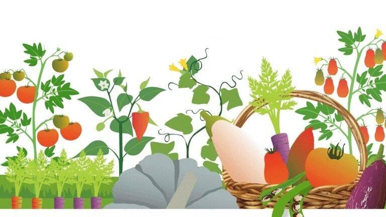 """Taller formativo: """"Uso de la biodiversidad cultivada en el nuevo reglamento para la producción ecológica"""""""