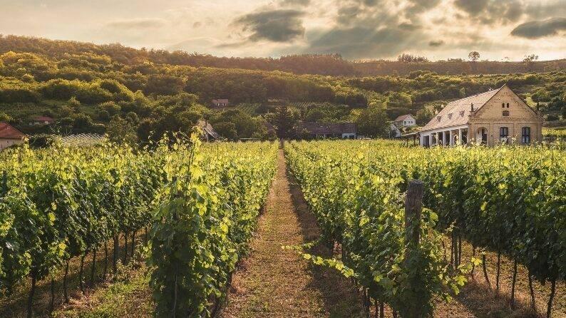 viticultura y enología