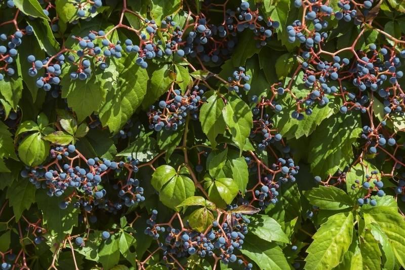 Manejo sostenible del suelo en viticultura y cubiertas vegetales