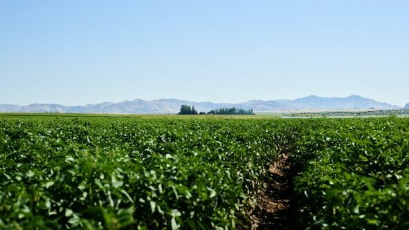 Soil Electrical Conductivity: Managing Salts for Sustained High Yields