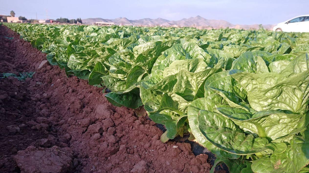 Producción intensiva en suelos degradados