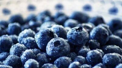 The International Highbush Blueberry Conference 2021