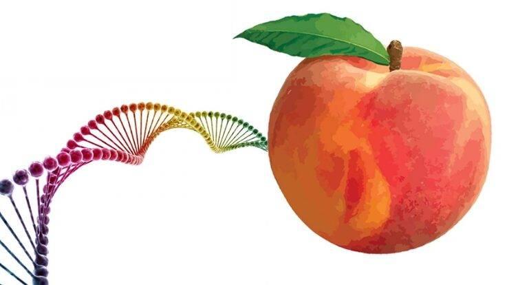 Seminario sobre cómo mejorar la calidad del fruto