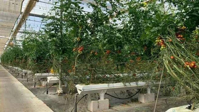 El futuro del cultivo en sustrato con recirculación en el campo almeriense