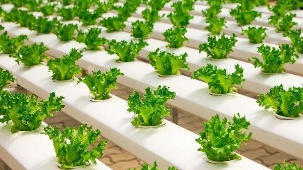Horticultura protegida sostenible: sistemas de cultivo sin suelo e hidroponía