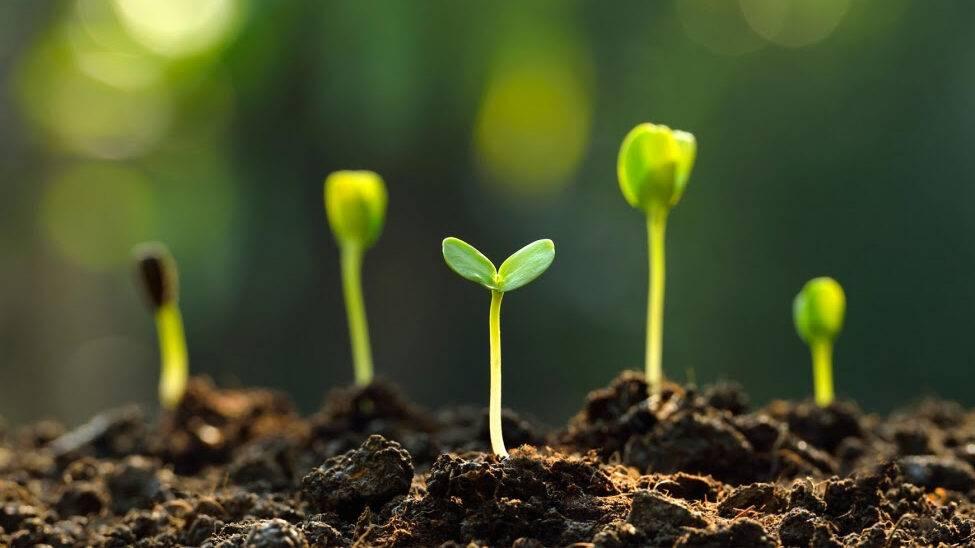 Capacidad de Campo del suelo: Definición y métodos de medida