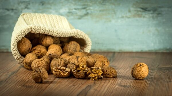 The Nut & Dried Fruit Global Online Forum