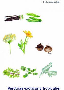Verduras exóticas y tropicales