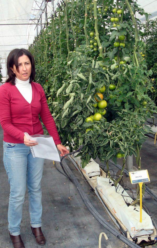 Eficiencia del uso del agua en invernadero