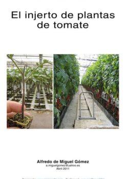 El injerto de plantas de tomate