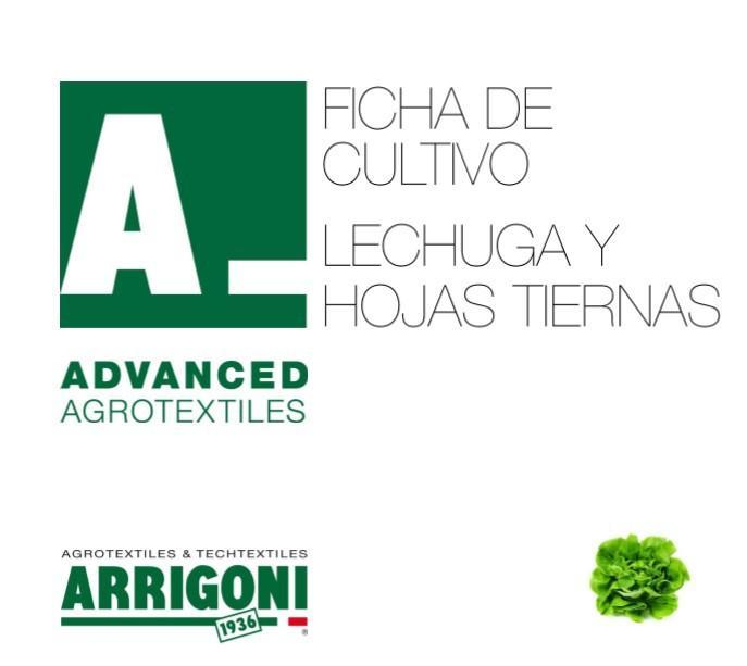 Ficha de cultivo. Lechuga y hojas tiernas