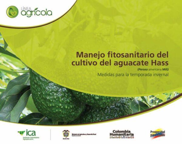 Manejo fitosanitario del cultivo del aguacate Hass. Medidas para la temporada invernal
